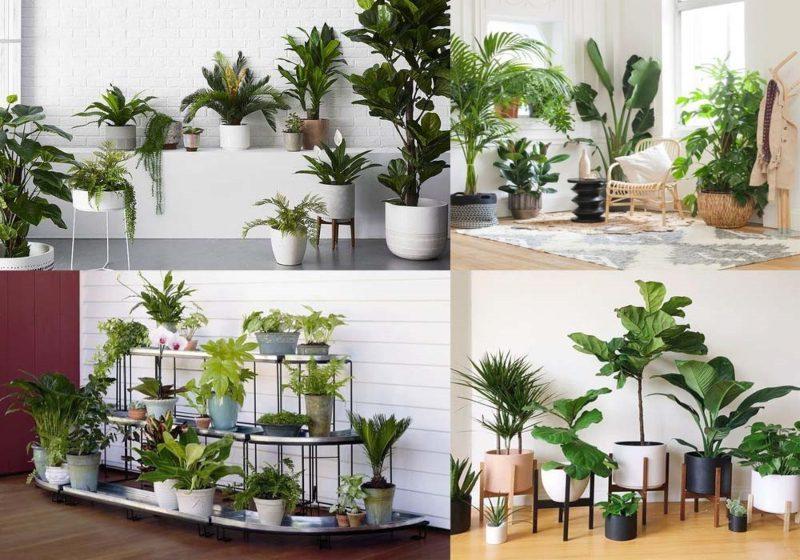 Các loại cây được trồng trong nhà