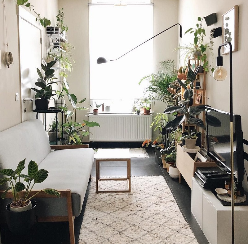 Chi tiết trang trí đắt giá đến từ cây xanh cho phòng khách nhà ống
